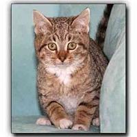 Adopt A Pet :: Trevor - Howell, MI