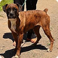 Adopt A Pet :: Heather - Hamilton, ON