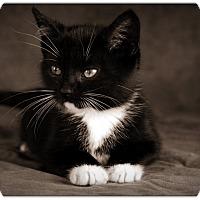 Adopt A Pet :: Leo - Raritan, NJ