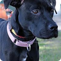 Adopt A Pet :: Cecily - Gainesville, FL