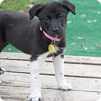 Adopt A Pet :: Skip-bo - Austin, TX