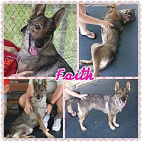 Adopt A Pet :: Faith - Pompano Beach, FL