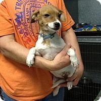 Adopt A Pet :: Aubri - Phoenix, AZ