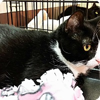 Adopt A Pet :: Luci (LD) - Little Falls, NJ