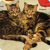 Adopt A Pet :: Gregorio - Lincoln, NE