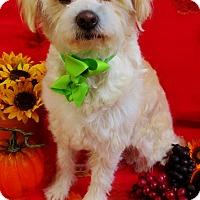 Adopt A Pet :: Luna - Irvine, CA