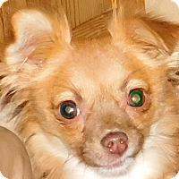 Adopt A Pet :: Maebelle - MINNEAPOLIS, KS