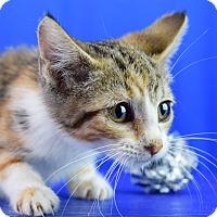 Adopt A Pet :: Dakota - Carencro, LA