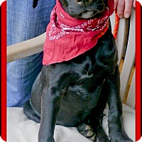Adopt A Pet :: Samantha family pup - Sacramento, CA