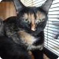 Adopt A Pet :: Luna-2 - Breinigsville, PA