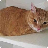 Adopt A Pet :: LAYLA - Upper Marlboro, MD