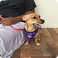 Adopt A Pet :: Tommy - Coral Springs, FL