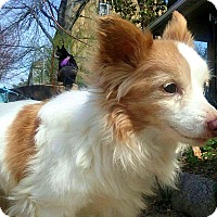 Adopt A Pet :: Kokomo - Andalusia, PA