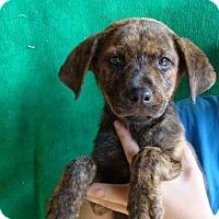 Adopt A Pet :: Tanka - Oviedo, FL