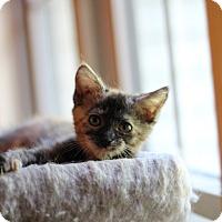 Adopt A Pet :: Gale - Richmond, VA