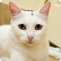 Adopt A Pet :: Buttercup - Boise, ID