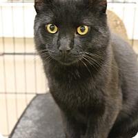 Adopt A Pet :: Sinbad - Medina, OH