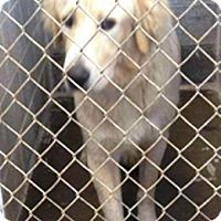 Adopt A Pet :: Pocus - Oswego, IL