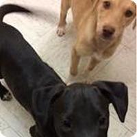 Adopt A Pet :: Jack 2 - Patterson, NY