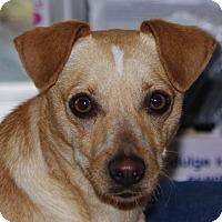 Adopt A Pet :: Pria - WESTMINSTER, MD