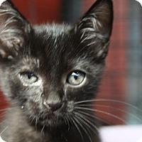 Adopt A Pet :: Paolo - Sarasota, FL