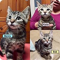 Adopt A Pet :: Benny - Novato, CA