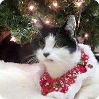 Adopt A Pet :: Hazel - Lloydminster, AB