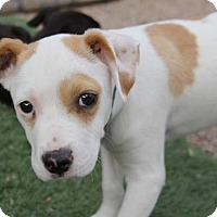 Adopt A Pet :: Kenji - Phoenix, AZ