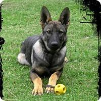 Adopt A Pet :: Undra - Riverview, FL