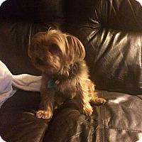 Adopt A Pet :: Oscar - Springfield, MO