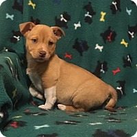 Adopt A Pet :: Frappe - Spring Valley, NY