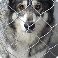 Adopt A Pet :: 48795 Frost - Zanesville, OH