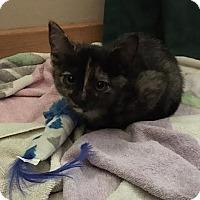 Adopt A Pet :: Pinch - Chandler, AZ