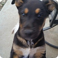 Adopt A Pet :: cabernet - temecula, CA