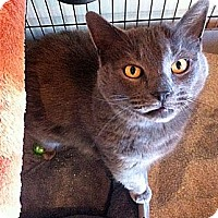 Adopt A Pet :: Blue - Secaucus, NJ
