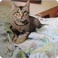 Adopt A Pet :: Soteria - Milwaukee, WI