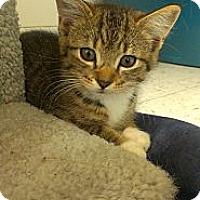 Adopt A Pet :: Wanda Sykes - Richboro, PA