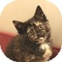 Adopt A Pet :: Booster - Vancouver, BC
