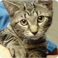 Adopt A Pet :: Bonnie - Chesapeake, VA