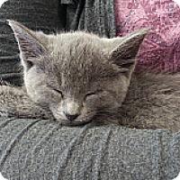 Adopt A Pet :: Gertrude - St. Louis, MO