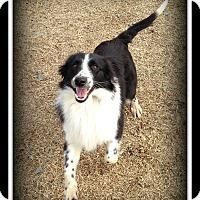 Adopt A Pet :: Ariel - Indian Trail, NC