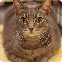 Adopt A Pet :: Baybee - Sacramento, CA