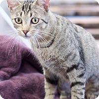 Adopt A Pet :: Ruby - Marietta, GA