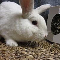 Adopt A Pet :: Pipkin - Newport, DE