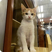 Adopt A Pet :: Marty - The Colony, TX