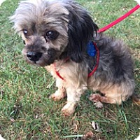 Adopt A Pet :: Coco - Spring City, TN