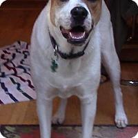 Adopt A Pet :: Lucy - Alpharetta, GA