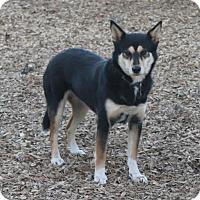 Adopt A Pet :: Eevie - Paso Robles, CA