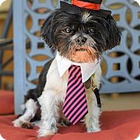 Adopt A Pet :: Bubs - Baton Rouge, LA