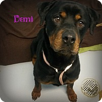 Adopt A Pet :: Demi - Muskegon, MI